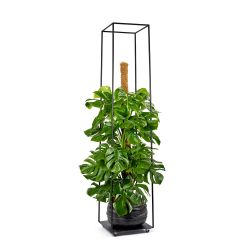 Plant Stand Large | Black