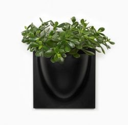 VertiPlants | Bio Black