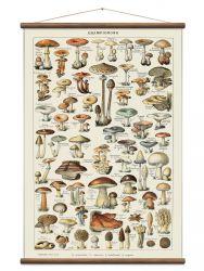 Vintage Poster Pilze