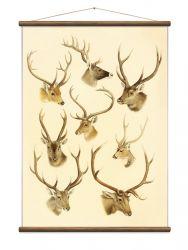 Vintage Poster Deer