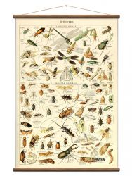 Vintage Poster Insects