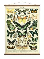 Vintage Poster Butterflies