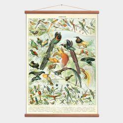 Vintage Poster Birds
