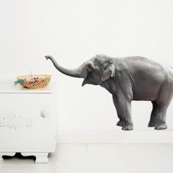 Wandsticker Safari-Freunde | Elefant
