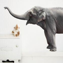 Wandaufkleber Safari-Freunde | Elefant XL