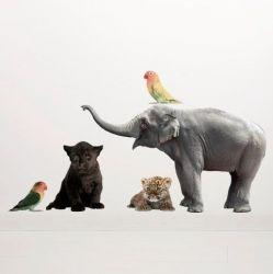Wandaufkleber Safari-Freunde | Set mit 5 Aufklebern | Set 3