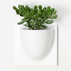 VertiPlants | Bio White