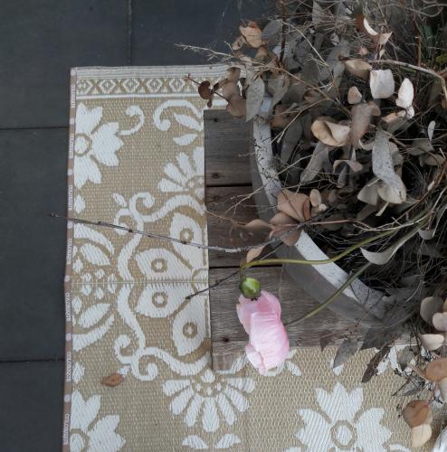 Colorique | Colourful Lifestyle Carpets