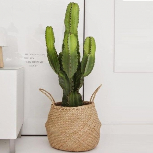 Noot | Cactuses & Baskets with Great Character