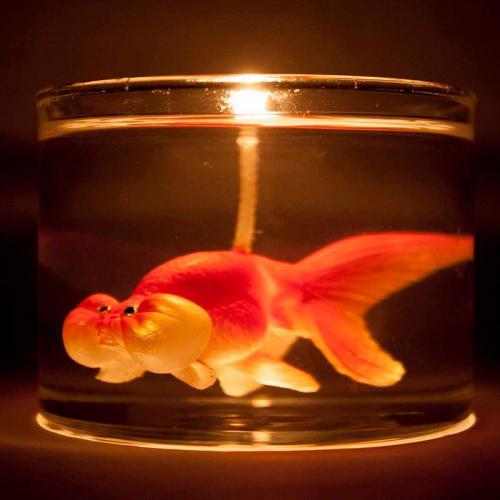 Eye Candle | Surprising Animal Candles