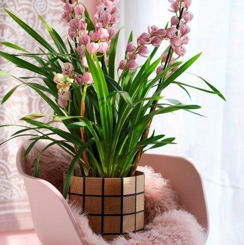 Karooz | Geometric Flower Pots