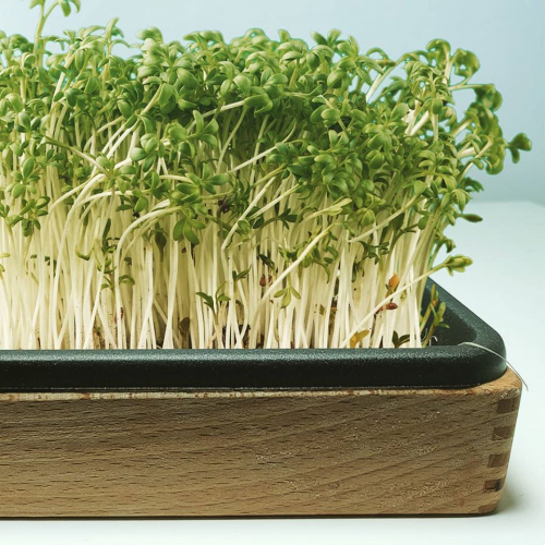 Evolve Garden | Baue dein bio Grünzeug Zuhause an
