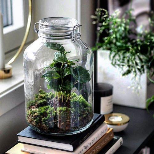 Growing Concepts | DIY-Pflanzenkits
