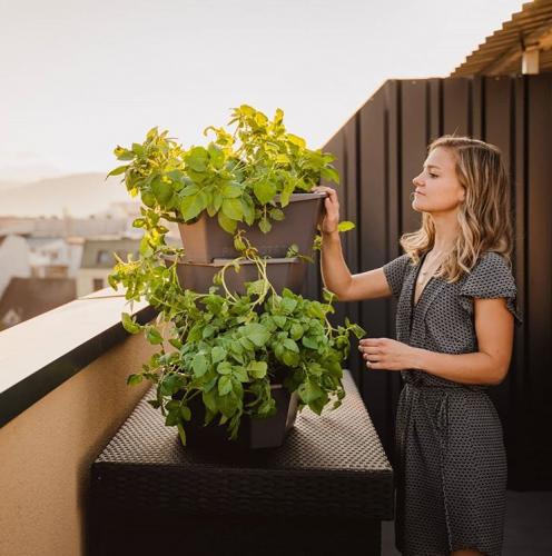 Gusta Garden | Endlich eigenes Obst und Gemüse