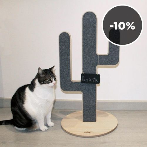 Halcyon Home | Paradise for Cats