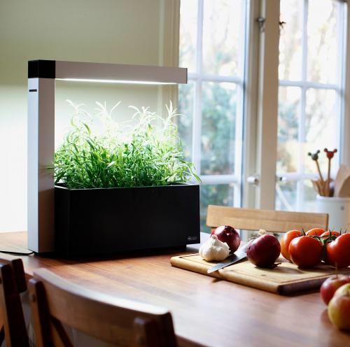 Tregren | Indoor Gardens
