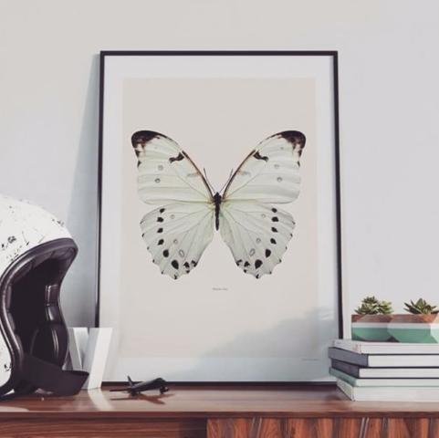 Liljebergs | Macro Insect Photography