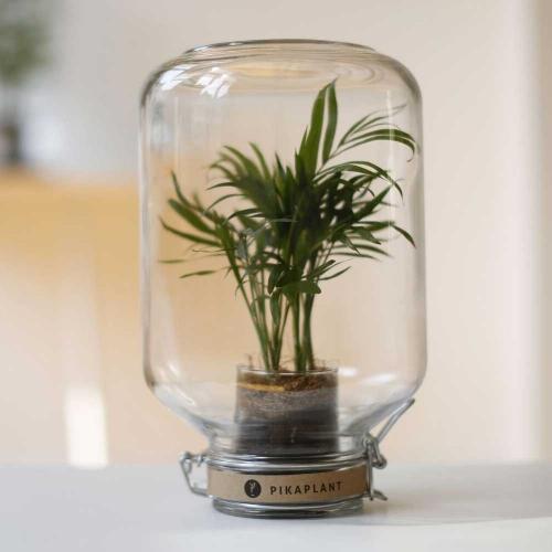 Pikaplant | Grünes Highlight: Pflanzenfreude im Glas