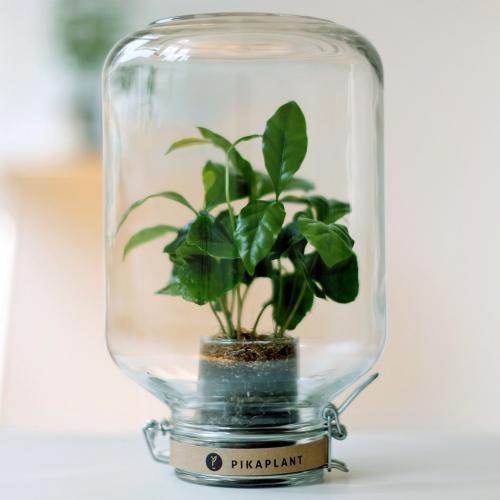 Pikaplant | Pflanzenfreude im Glas