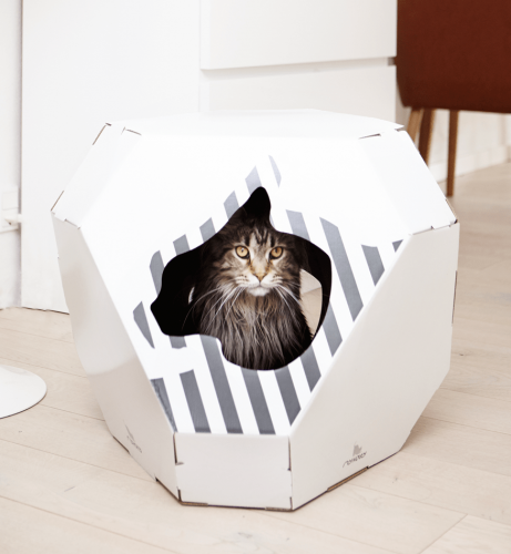myKotty | Exciting Cat Accessories