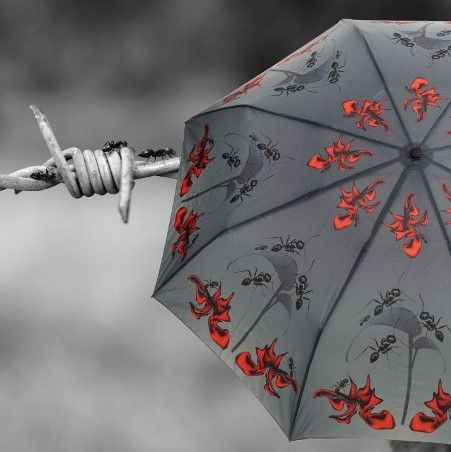 La Brella | Rainforest-inspired Umbrellas